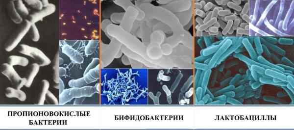 Виды бактерий