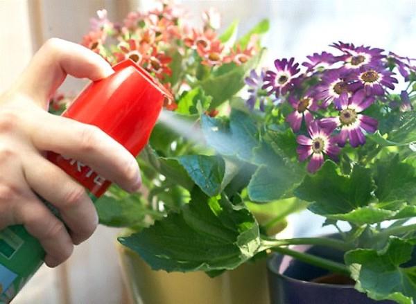 Обработка цветов от вредителей