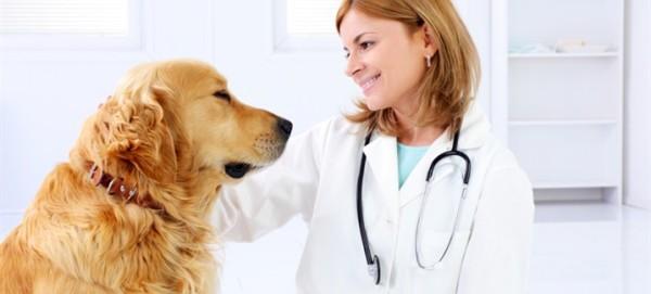 Если хотите, чтобы Вы, Ваша семья и Ваш питомец были здоровы, то не ленитесь, и регулярно посещайте ветеринара