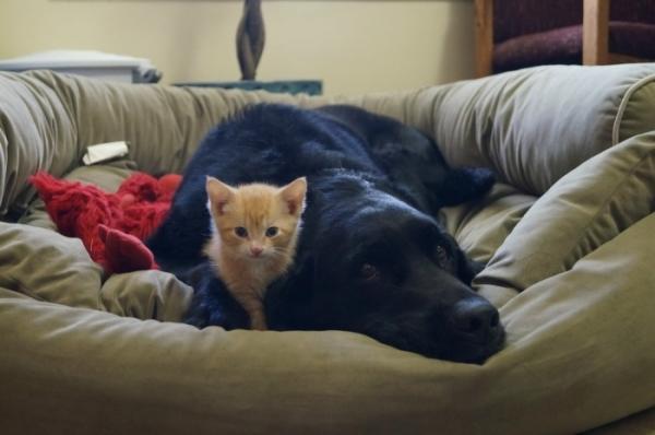 Наши любимые домашние животные могут быть переносчиками лямблий