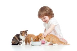 Домашние животные являются одним из источников заражения глистами