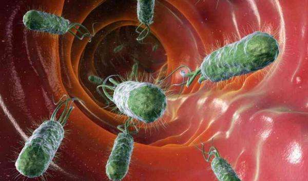 Нитевидные отростки (жгутики) помогают бактериям передвигаться