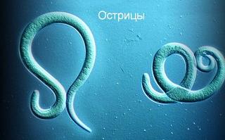 Распространенный детский паразит