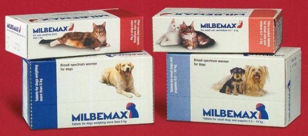 Домашние животные также нуждаются в выведении глистов