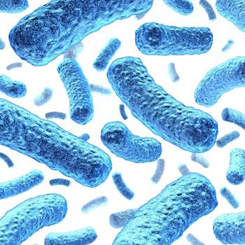 Мир бактерий-паразитов имеет широкое распространение
