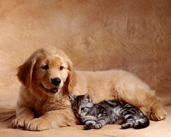 Кошки и собаки периодически становятся переносчиками паразитарных заболеваний