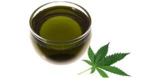 Конопляное масло помогает при лечении гельминтоза