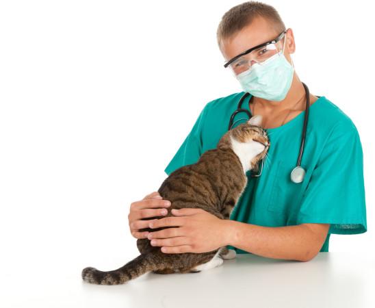 При подозрении на кое-либо заболевание у вашего питомца, доверьтесь специалисту