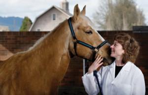 При первых признаках недуга у вашего питомца обратитесь за консультацией к ветеринару
