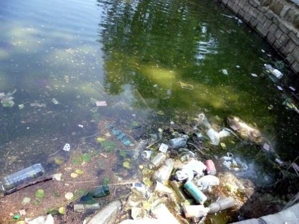 Загрязненные водоемы являются отличной средой для размножения комаров, которые становятся переносчиками опасных заболеваний