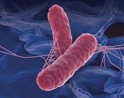 Бактерии сальмонеллы очень устойчивы к внешней среде, поэтому очень долго сохраняются вне организма хозяина