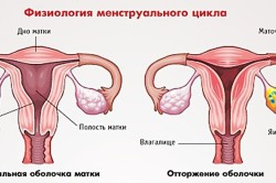 Физиология месячных