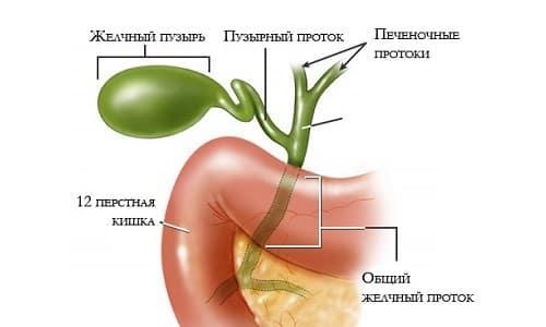 Гипертония желчного пузыря симптомы лечение. Все о ...