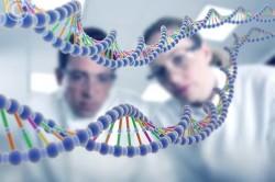 Передача гена гиперовуляции по наследству