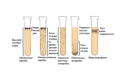 Определение вида бактерий, при проведении анализов