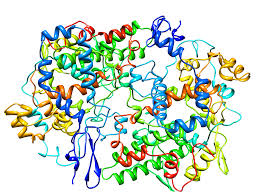 Фермент циклооксигеназа (ЦОГ), которая синтезирует простагландины - медиаторы воспаления и боли.