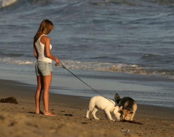 """Собаки крайне подвержены заражению паразитами, особенно во время прогулок и """"общения"""" с другими собаками"""