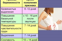 Первые признаки беременности до задержки