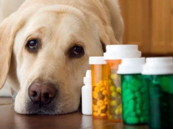 При назначении лекарства обязательно учитываются вес, возраст и состояние питомца