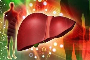 Алкоголь разрушает гепатоциты печени, которые замещаются соединительной тканью или жиром