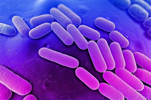 Паразит-бактерия