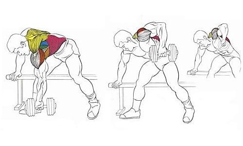 Топографияширочайшей мышцы спины фото