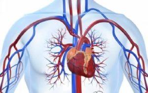 Система кровотока